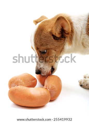 Cute dog with sausages isolated on white background - stock photo