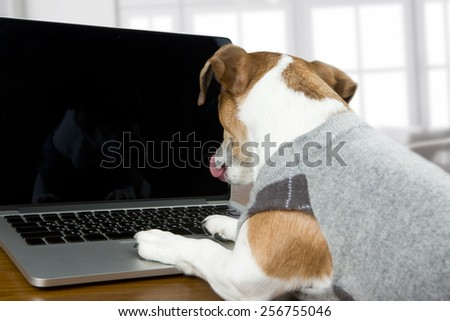 Cute dog works in the office at the computer. Licked. Black screen background you can place your text - stock photo