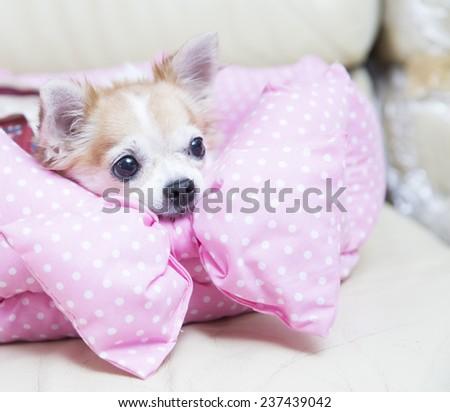 cute dogs - stock photo