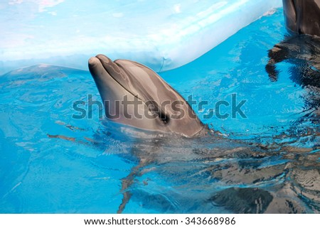 Cute dolphin in the dolphinarium - stock photo