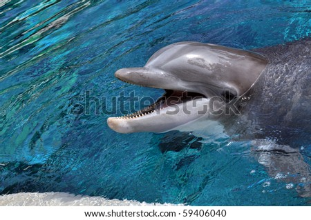 cute dolphin smiling - stock photo