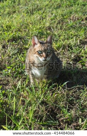 Cute domestic cat in the outdoor. - stock photo