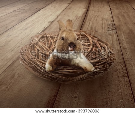 Cute easter bunny inside the nest. Happy easter concept - stock photo