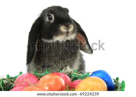 Cute easter bunny with colored eggs. All on white background.