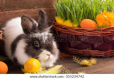 cute easter bunny with easter eggs  - stock photo