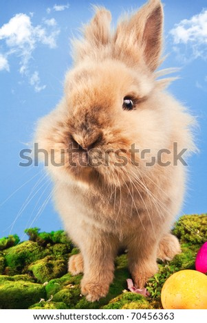 Cute Easter bunny with painted egg on a blue sky background