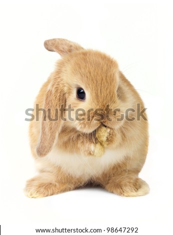 Cute easter rabbit - stock photo