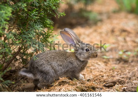 Cute easter rabbit hiding in wild nature  - stock photo