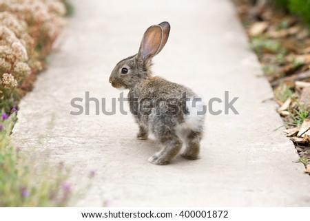 Cute easter rabbit runs on  rural footpath - stock photo