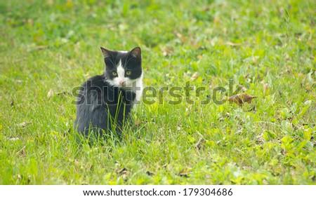 Cute feral kitten. - stock photo