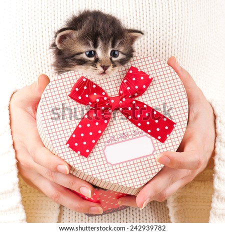 Cute fluffy kitten in the gift bag in the form of the heart on humans hands - stock photo