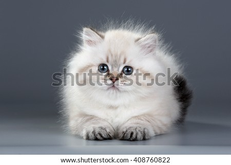 Cute fluffy kitten on a gray background
