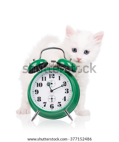 Cute fluffy kitten with alarm clock isolated over white background - stock photo