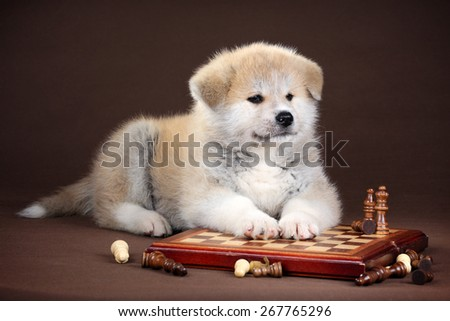 Cute fluffy puppy lying on the chessboard - stock photo