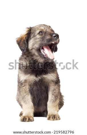 cute fluffy puppy mutts with open mouth on white background