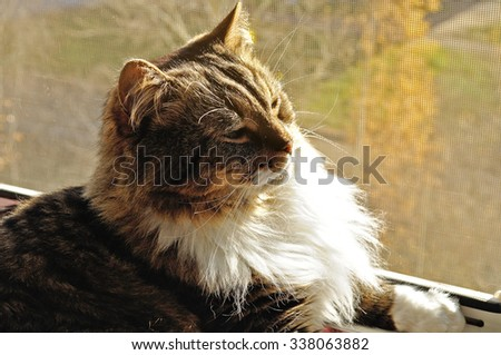 Cute fluffy tabby cat resting on a windowsill under the sunlight. Closeup pet portrait. Selective focus at the eyes.