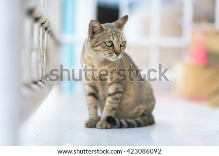 Cute funny cat close up, domestic cat, relaxing cat, cat resting, cat playing at home - stock photo
