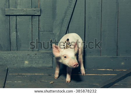 Cute funny fashionable glamour pink small princess piglet in queen crown standing indoor in studio on wooden background, horizontal picture
