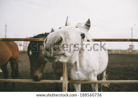 cute funny white horse in the rustic stables field - stock photo