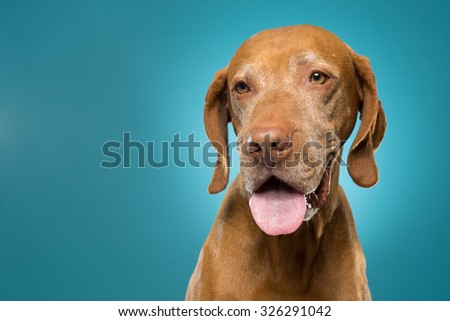 cute golden dog portrait  - stock photo