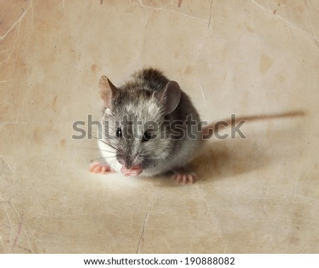 Cute gray and white mouse. Retro background - stock photo