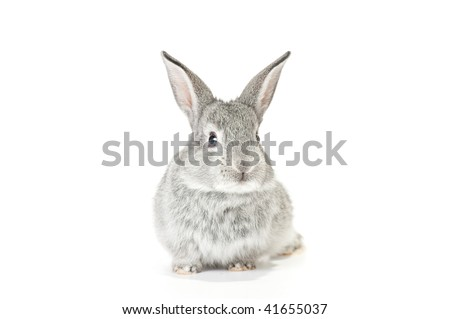 Cute gray baby rabbit on white background - stock photo