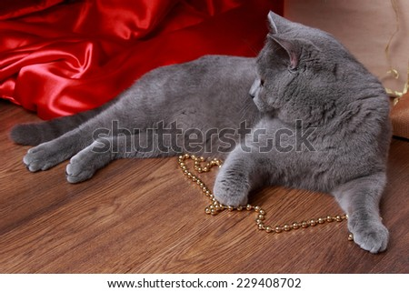 Cute gray fluffy one year kitten investigating the decorations on a Christmas tree on Holiday theme/Lovely domestic animal on holiday theme - stock photo