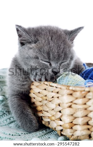 Cute gray kitten in wicker basket with skeins of thread on warm plain isolated on white
