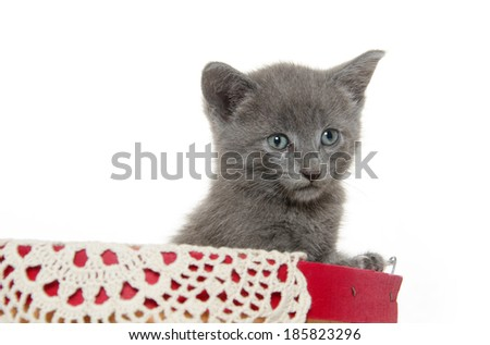 Cute gray kitten inside of a basket on white background