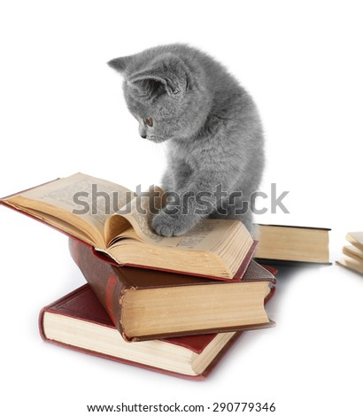 Cute gray kitten with pile of books isolated on white - stock photo