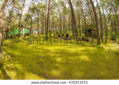 Cute green carpet in the forest near the small village