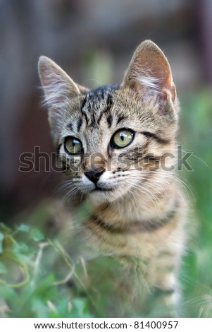 cute grey cat in the grass - stock photo