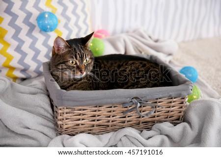 Cute grey cat in wicker basket - stock photo