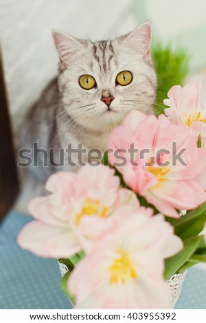 cute grey cat with pink tulips
