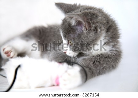 Cute grey kitten playing with a toymouse. Shallow dof - stock photo