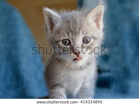 Cute grey striped tabby kitten with tongue sticking out - stock photo