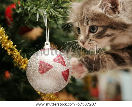 Cute grey tabby kitten investigating the decorations on a Christmas tree