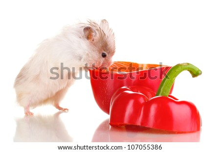 Cute hamster and pepper salad isolated white - stock photo