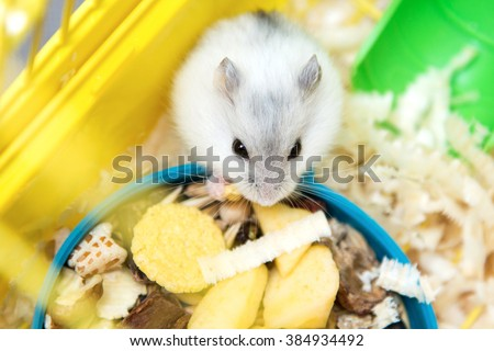 cute hamster eating in cage - stock photo