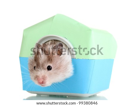 Cute hamster in house isolated white - stock photo