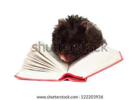 cute hamster pet reading a book - stock photo