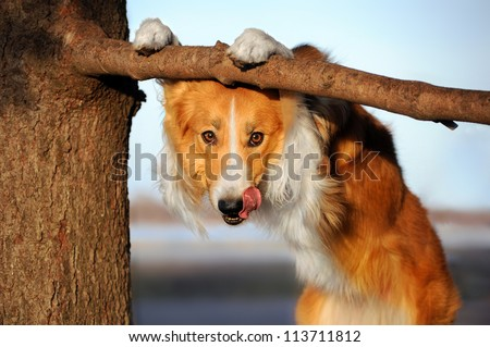cute happy dog makes a funny pose and sticks his tongue - stock photo