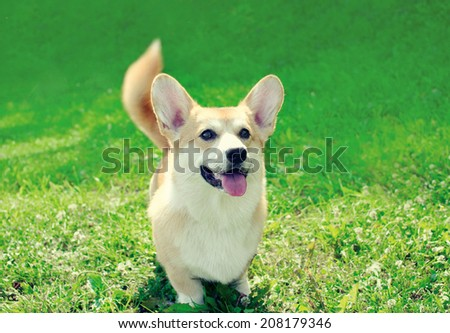 Cute happy dog on the grass summer - stock photo