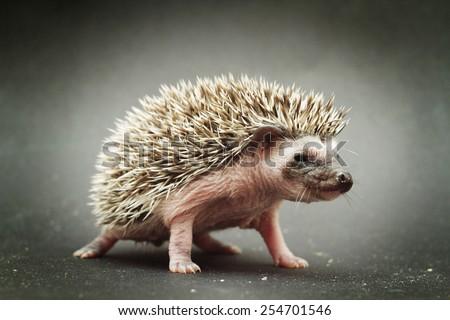 cute hedgehog baby background - stock photo