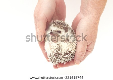 cute hedgehog baby roll