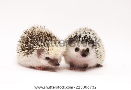 cute hedgehogs baby - stock photo
