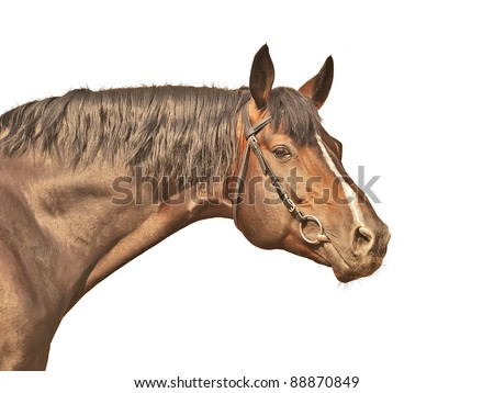 cute horse isolated on white - stock photo