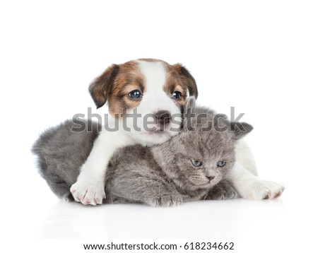 Cute jack russell puppy hugging a kitten.  isolated on white background