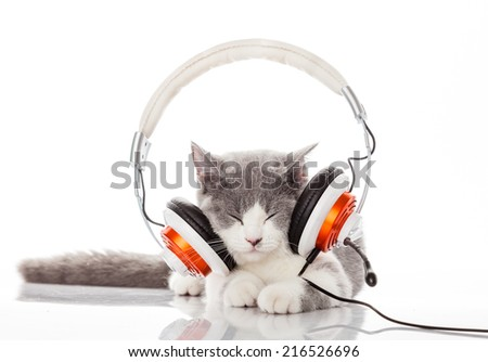 Cute kitten and headphones. Young cat is listening to music with headphones - stock photo