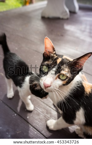 Cute kitten and mother cat lovely - stock photo